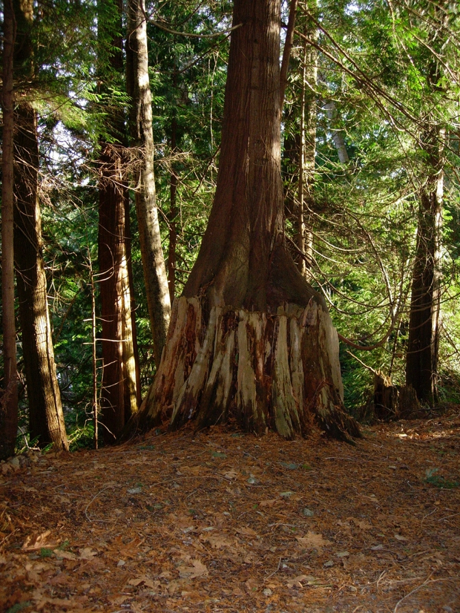 Tree Growing Tree